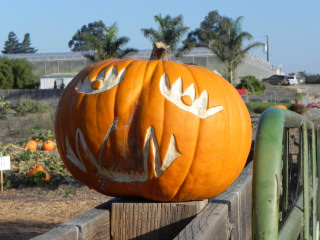 Crown Eye, Nipomo Pumpkin Patch best carving idea