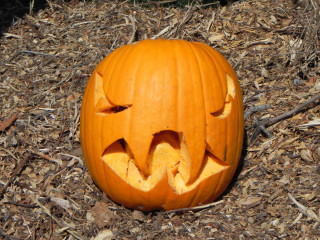 Unchewed Food, Nipomo Pumpkin Patch best carving idea
