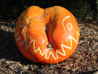 Croc, Nipomo Pumpkin Patch carving idea