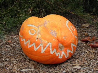 Medium Dino, Nipomo Pumpkin Patch carving idea