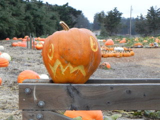 Thing, Nipomo Pumpkin Patch carving idea