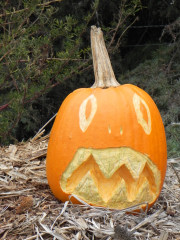 Scared, Nipomo Pumpkin Patch carving idea