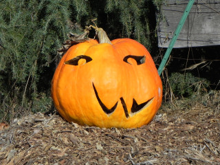 Usual Improves with age, Nipomo Pumpkin Patch carving idea