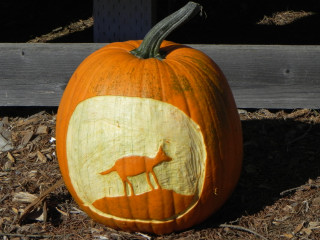 Coyote, Nipomo Pumpkin Patch carving idea