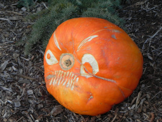 Windy, Nipomo Pumpkin Patch carving idea