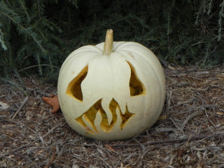 White Fire, Nipomo Pumpkin Patch best carving idea
