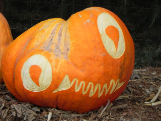 Big Eyes, Nipomo Pumpkin Patch best carving idea