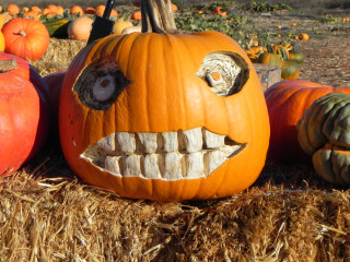 Big teeth just gets better with age, Nipomo Pumpkin Patch best carving idea