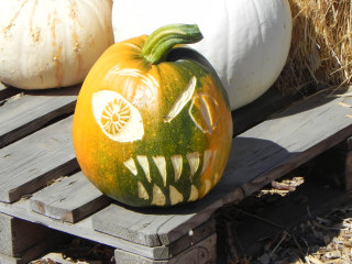 Mixed up carved Pumpkin,  Nipomo Pumpkin Patch carving idea