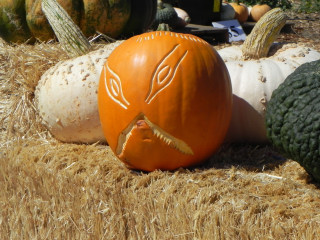 X carved Pumpkin,  Nipomo Pumpkin Patch carving idea