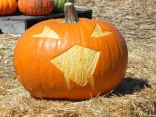 Star Bite, Nipomo Pumpkin patch carving idea