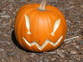 Fish Eye carved Pumpkin,  Nipomo Pumpkin Patch carving idea