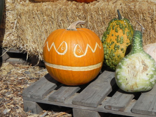Space Man carved Pumpkin,  Nipomo Pumpkin Patch carving idea