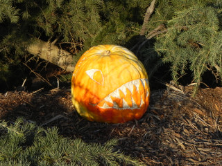 Sea Monster, Nipomo Pumpkin patch carving idea