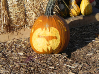 Tasty Bird, Nipomo Pumpkin Patch best carving idea