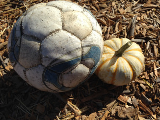 Nipomo Pumpkin Patch ornamental 2
